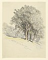 Drawing, Studies. Oak Trees at Lake Dunmore, Vermont., August 23, 1917 (CH 18368863).jpg