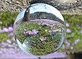 Drebacher Krokuswiesen im Glaskugel. IMG 8122OB.jpg