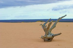Mungo National Park - A lone piece of wood atop a sand dune in Mungo National Park, June 2005