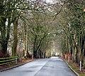 Driveway, Rosspark Hotel, Kells - geograph.org.uk - 700014.jpg