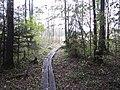 Dusetų sen., Lithuania - panoramio (138).jpg