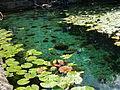 Dzibilchaltún Cenote - P1110788.JPG