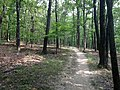 Eagle Valley Trail - panoramio.jpg