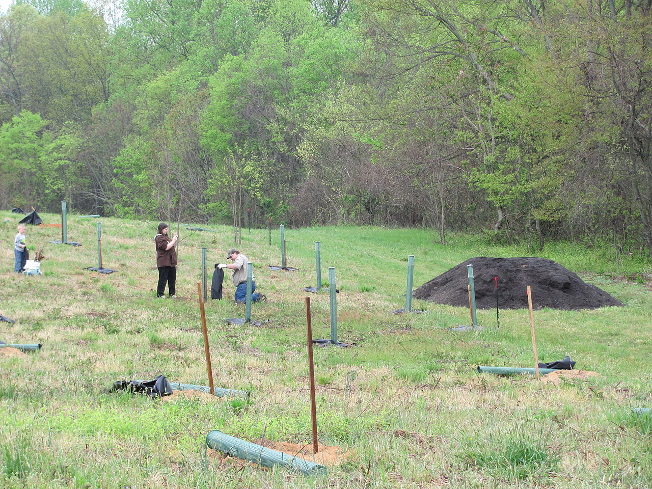 Tree plantation week