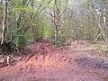 East Devon Way in Rushmoor Wood - geograph.org.uk - 163110.jpg