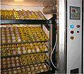 Egg incubator.jpg
