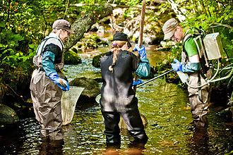 EKOenergy - River restorations