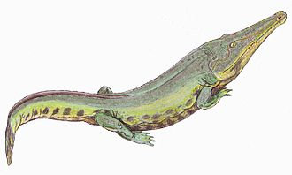Moenkopi Formation - Eocyclotosaurus .