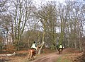 Epping Forest - geograph.org.uk - 117452.jpg