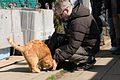 Eric-san and a cat in Enoshima (8583645389).jpg