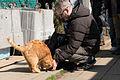 Eric-san and a cat in Enoshima (8583645389).jpg