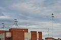 Estornells a les antenes, València.JPG