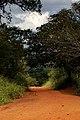 Estrada de terra Pantanal.jpg