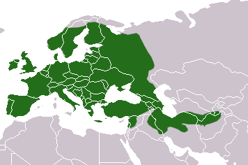 European Badger area