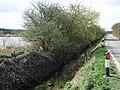 Far Ings Lane, Barton Upon Humber - geograph.org.uk - 1230727.jpg