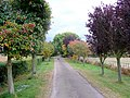 Farm road and footpath - geograph.org.uk - 1545444.jpg