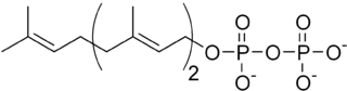 http://upload.wikimedia.org/wikipedia/commons/thumb/5/53/Farnesyl_pyrophosphate.png/320px-Farnesyl_pyrophosphate.png
