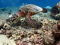 Fauna marina de Baros (Maldivas).jpg