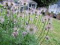 Feathery Flowers.JPG
