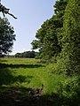 Field and trees near Trewarlett - geograph.org.uk - 459170.jpg