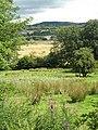 Fields by Barr Castle - geograph.org.uk - 1443062.jpg