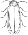 Firefly (PSF).png