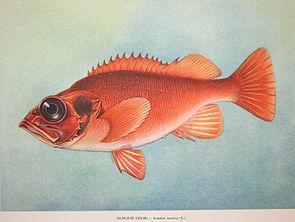 Fish3819.jpg