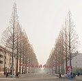 Flags & trees (33139883035).jpg