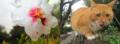 Fleur et chat.png