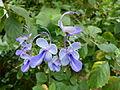 Fleurs bleues exotiques.jpg