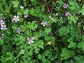 FloraRome (3).JPG