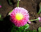 Flower, Fryšták (3).jpg