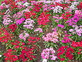 Flower garden unknown plant 1.jpg