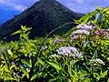 Flower mountain.jpg