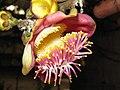 Flowerags002.jpg