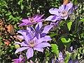 Flowers (28595011868).jpg