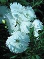 Flowers (42).JPG