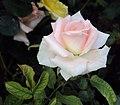 Flowers - Uncategorised Garden plants 122.JPG