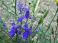 Flowers in Monsoon 15.JPG