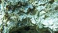 Flowing (37239422701).jpg
