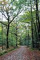 Forêt de Chevré en automne.JPG