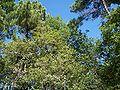 Forêt de la Coubre 042.jpg