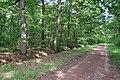 Forêt domaniale de Bois-d'Arcy 47.jpg