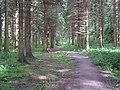 Forest Walk , Hamsterley Forest - geograph.org.uk - 244153.jpg