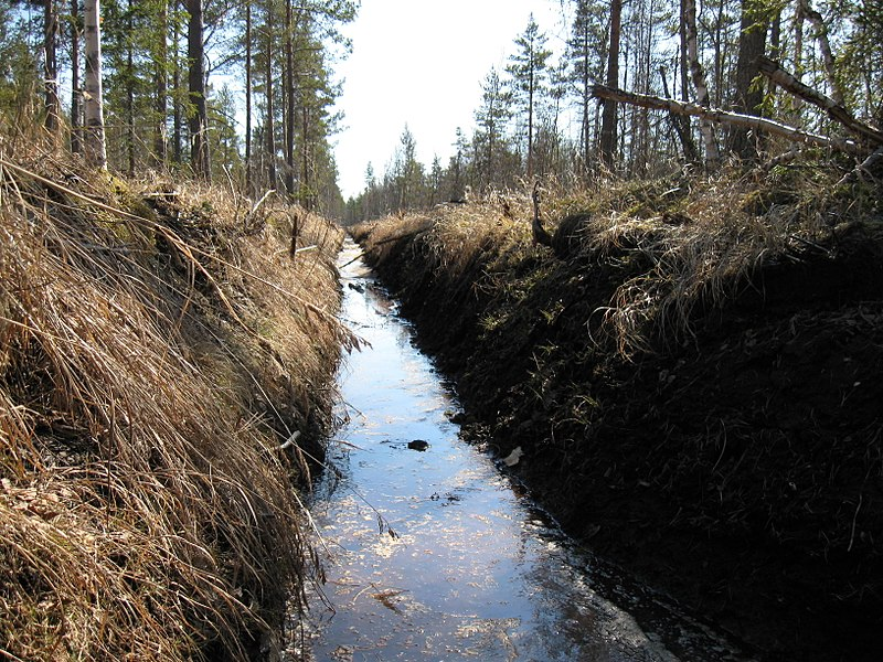 File:Forest ditch.JPG