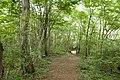 Forest in Mt.Kesoku 02.jpg