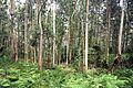 Forest near Bermeo 2.jpg