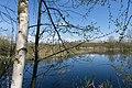 Forest near Olgino 2020-05-08-3.jpg