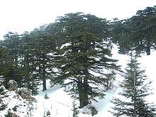 تاريخ لبنان تسمية لبنان