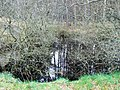 Forest pool - geograph.org.uk - 371975.jpg